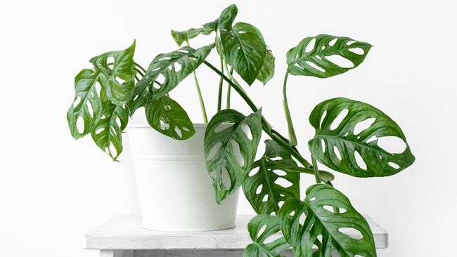 tanaman hias